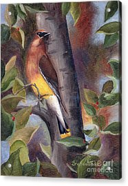 Acrylic Print featuring the painting Cedar Waxwing by Brenda Thour