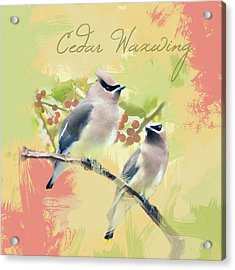 Acrylic Print featuring the photograph Cedar Waxwing Watercolor Photo by Heidi Hermes