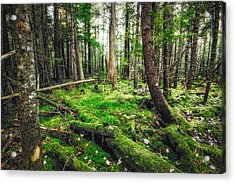 Acrylic Print featuring the photograph Cedar Woods by Robert Clifford