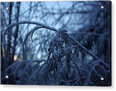 Cedars Of Ice Acrylic Print