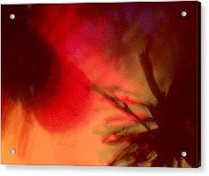 Celebrate Acrylic Print by M Stuart