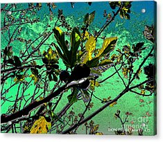 Celebrating The Spring 2 Acrylic Print