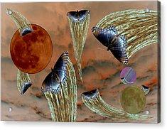 Celestial Butterflies Acrylic Print