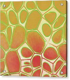 Cells Abstract Five Acrylic Print by Edward Fielding