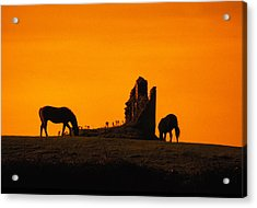 Celtic Horses At Sunset Acrylic Print by Carl Purcell