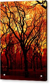 Cental Park In Red Acrylic Print by Diane C Nicholson