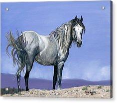 Centauro Sky Acrylic Print