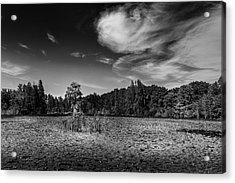 Center Cypress - Bw Acrylic Print