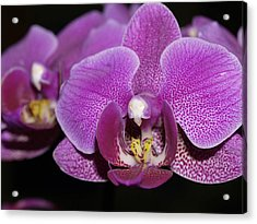 Center Of Attention Acrylic Print by Joyce Hutchinson