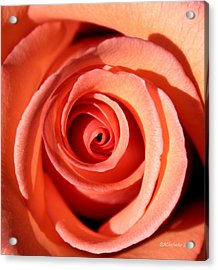 Acrylic Print featuring the photograph Center Of The Peach Rose by Barbara Chichester
