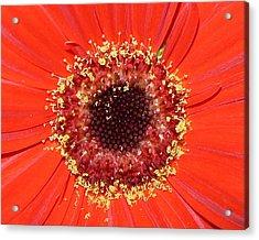 Center Seeds Acrylic Print