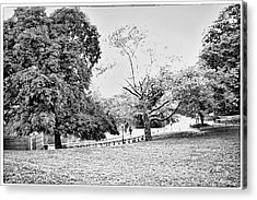 Acrylic Print featuring the photograph Central Park In Black And White by Madeline Ellis