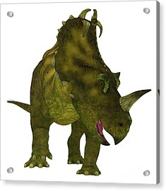 Centrosaurus Dinosaur Neck Frills Acrylic Print