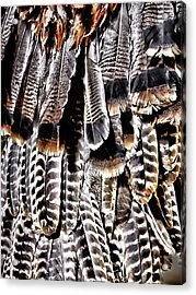 Acrylic Print featuring the photograph Ceremonial Feathers by Ann Powell
