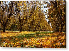Ceres Orchard - Fall Acrylic Print by Stephen Bonrepos