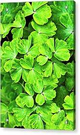 Certain Green Acrylic Print by Christina Rollo