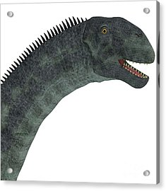 Cetiosaurus Dinosaur Head Acrylic Print