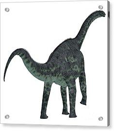 Cetiosaurus Dinosaur Tail Acrylic Print
