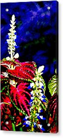 Cf1a Acrylic Print by James Granberry