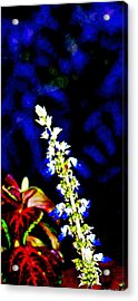 Cf1f Acrylic Print by James Granberry