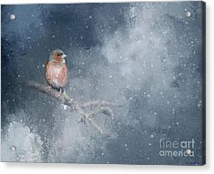 Acrylic Print featuring the photograph Chaffinch On A Cold Winter Day by Eva Lechner