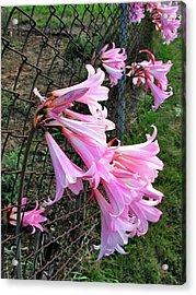 Chain Lillies Acrylic Print
