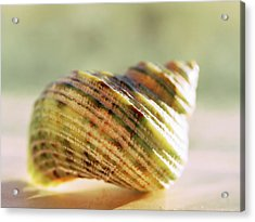 Acrylic Print featuring the photograph Chambered by Tom Druin