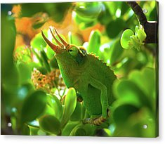 Chameleon King Acrylic Print