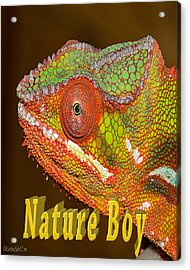 Chameleon Nature Boy Acrylic Print
