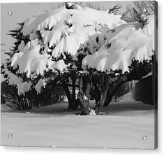 Chance Of Snow Acrylic Print by Nicholas J Mast