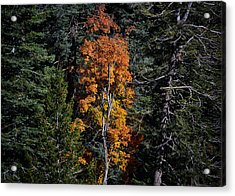 Change Of Seasons Acrylic Print