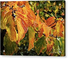 Acrylic Print featuring the photograph Changes by Peggy Hughes