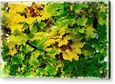 Changing Leaves Acrylic Print by Russ Harris