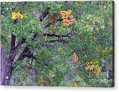 Changing Of The Seasons Acrylic Print by Mary Deal