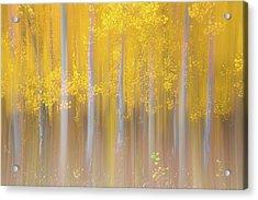 Changing Seasons Acrylic Print by Darren White