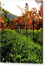 Changing Vines Acrylic Print