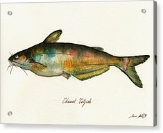 Channel Catfish Fish Animal Watercolor Painting Acrylic Print
