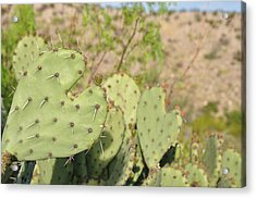 Character Cacti Acrylic Print by Thor Sigstedt