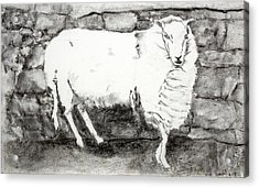 Charcoal Sheep Acrylic Print