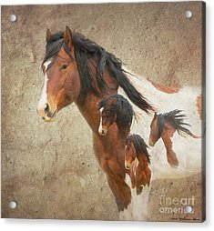 Charger As Art Acrylic Print by Nicole Markmann Nelson