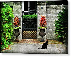 Charleston Cat Acrylic Print