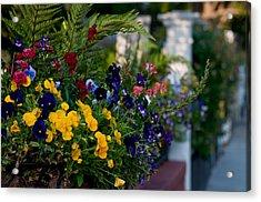 Charleston Flower Boxes Acrylic Print by Melissa Wyatt