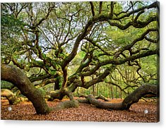 Charleston Sc Angel Oak Tree South Carolina Landscape Acrylic Print