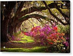 Charleston Sc Magnolia Plantation Gardens - Memory Lane Acrylic Print