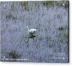 Charleston Wildlife 1 Acrylic Print