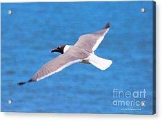 Charleston Wildlife. Seagull Acrylic Print
