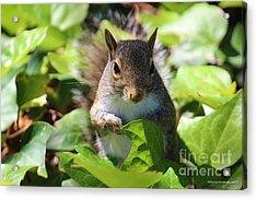 Charleston Wildlife. Squirrel Acrylic Print