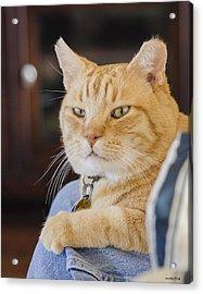 Charlie Cat Acrylic Print