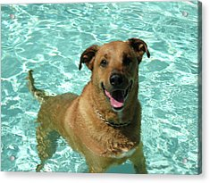 Charlie In Pool Acrylic Print
