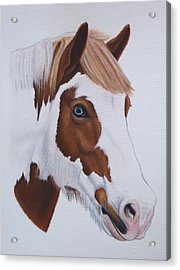 Charlie Acrylic Print by Lucy Deane